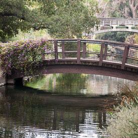 Davis, CA Putah Creek and arboretum